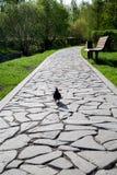 En fot- bana som göras av stenar av ojämn form med en duva arkivfoto