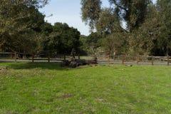 En fotvandra slinga, i att fotvandra slingan i parkera Fotografering för Bildbyråer