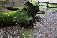 En fotvandra slinga, i att fotvandra slingan i parkera Royaltyfria Bilder