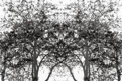 En framsida i de svartvita träden Royaltyfri Foto