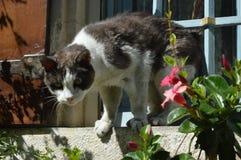En fransk katt royaltyfri fotografi