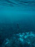 En freediver på Ewens damm Fotografering för Bildbyråer