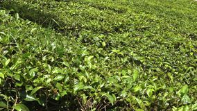 En frodig grön plats i Indien stock video