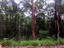 En frodig högväxt australisk bushland arkivfoton