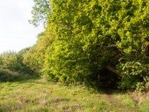 En frodig valvgång av träd som igenom leder till en bana för att gå Arkivfoton