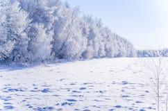 En frostig dag Närliggande vinterskog och fält Arkivfoto