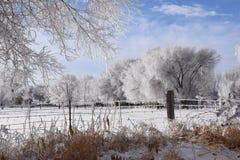 En Frosty Field Arkivfoton