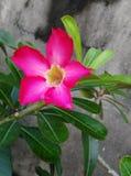 En full blom Fotografering för Bildbyråer