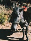 En funktionsduglig häst Royaltyfri Fotografi