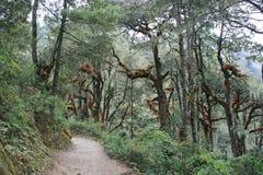 En gå bana var inpassad i skogen nära Paro (Bhutan) Royaltyfria Bilder