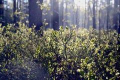 En gå i naturen Royaltyfri Fotografi