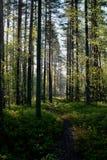 En gå i naturen Arkivfoto