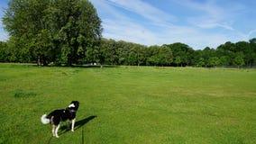 En gå med hunden Royaltyfri Fotografi
