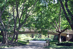 En gå till och med Central Park Fotografering för Bildbyråer