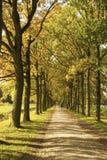 En gå till och med hösten Arkivbilder