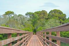 En gångbana över den inlands- vattenvägen på McGough som naturen parkerar i indier, vaggar stranden, Florida arkivfoton