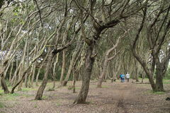 En gå in i naturen Royaltyfria Foton