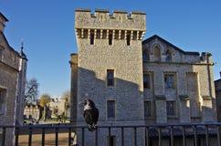 En galande i tornet av den London fästningen Arkivbilder