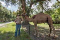 En gamal man och hans kamel Arkivfoton