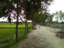 En gamal man som går för hans öde Dakshin Barasat VÄSTRA BENGAL INDIEN royaltyfria bilder