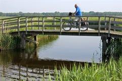 En gamal man som rider en cykel i polderlandskap royaltyfria bilder