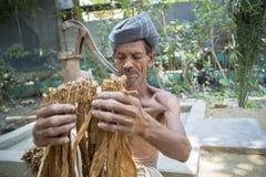 En gamal mantobakarbetare som bearbetar gruppen av tobak i Dhaka, manikganj, Bangladesh Royaltyfri Fotografi