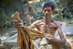 En gamal mantobakarbetare som bearbetar gruppen av tobak i Dhaka, manikganj, Bangladesh Royaltyfria Bilder