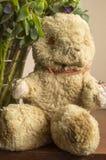En gamla slog Teddy Bear Royaltyfri Foto