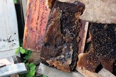 En gammal övergiven och öde bikupa royaltyfri foto