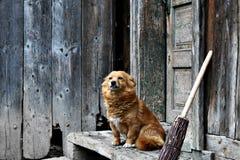 En gammal bevaka hund Arkivbild