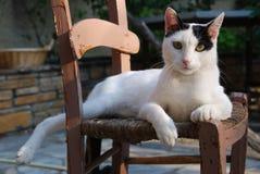 En gammal bondaktig trästol upptagen av katten Royaltyfri Foto