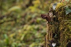 En gammal champinjon som växer ut ur en trädstubbe Arkivfoton