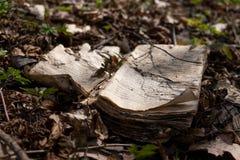 En gammal förmultna bok som ligger på skoggolvet royaltyfri bild