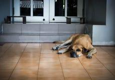 En gammal hund som framme ligger av huset Royaltyfri Foto