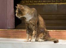 En gammal och sjuk katt arkivbilder