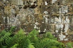 En gammal stenväggtextur/bakgrund Arkivfoton