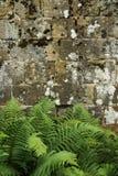 En gammal stenväggtextur/bakgrund Fotografering för Bildbyråer
