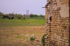 En gammal tegelstenstenvägg arkivfoton