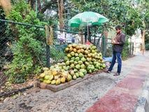 En gatakokosnötförsäljare i Indien royaltyfri fotografi