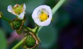 En gemensam blomma Arkivbild