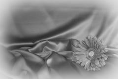 En gerberablomma på en bakgrund från tyg Royaltyfria Foton