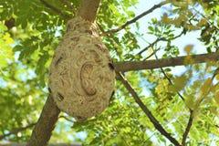 En getingbo smälldes i av ett träd i morgonen royaltyfria bilder