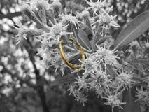 En gifta sig Ring Between Garden Flowers Fotografering för Bildbyråer