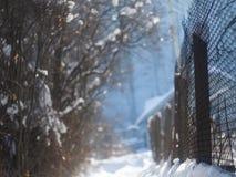 En gränd med en staket- och buskevinter royaltyfri fotografi