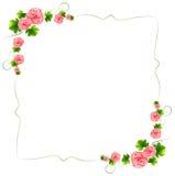 En gräns med rosa blommor för nejlika Royaltyfria Foton