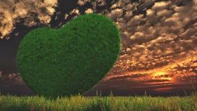 En gräs- hjärta i en grön äng och stratusmoln i aftonen Arkivfoto