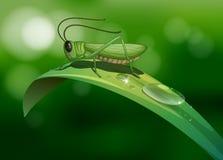 En gräshoppa i ett långt blad vektor illustrationer