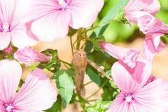 En gräshoppa på en blomma Arkivfoton