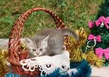 En grå fluffig katt i en korg nära trädet för nytt år royaltyfri foto