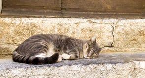 En grå inhemsk katt som sover på ett moment Arkivfoton
